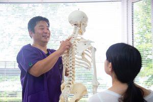 骨格模型を使い説明いたします。